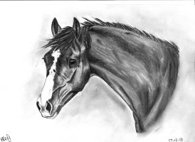 Pencil Horse Portrait by piprxo