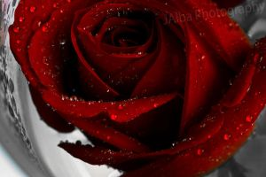 Deep Red 6 by JaSaAL