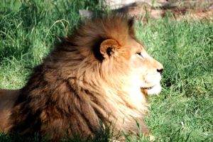 King of the Zoo by inmediasres