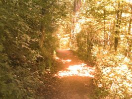 Red forest path by JRDN762