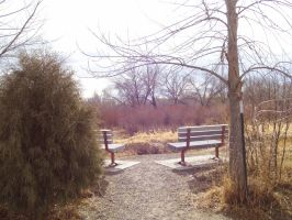 A pair of benches on Norm's Island ~ by runninglane