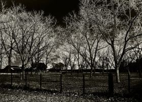 wicked fence by BemisSmith