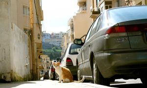 cat on the street by ISAWTHESTARSTONIGHT