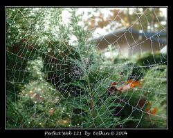 Perfect Web 121 by Eolhin