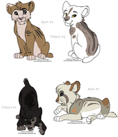 Felineadopt32-CLOSED- by Eternal-adopts