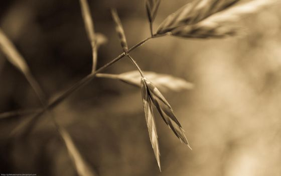 Old Grass by juliekoesmarno