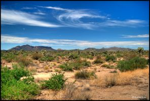 Joshua trees HDR by andrearossi