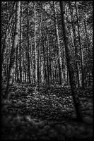 pennsylvania Woods by avataria