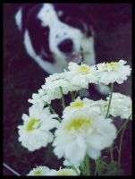 Dog behind the flowers by KissOnTheRain