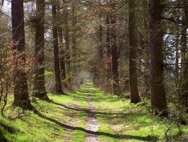 Forest Path Spring Stock by ValerianaSTOCK