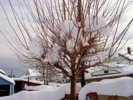 Tree With Snow by Bambiified