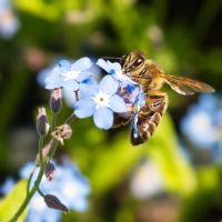 Bees and flowers XXIII by starykocur