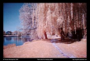 Path under the weeping willow by Argolith