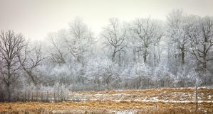 February Frost II by dkwynia