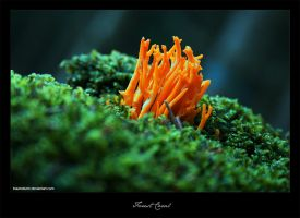 Forest Coral by Traumsturm