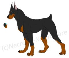 doberman by TheDokter