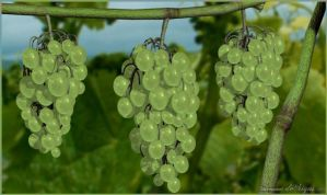 Grapes V2 by admax