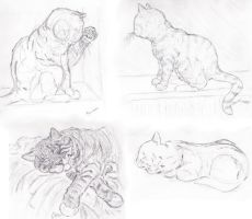 Cat Sketches by caitiedidd