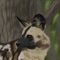 African Wild Dog by FelonDog