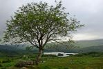Lonely  Tree 4 by CitizenFresh