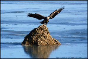 Coming in Hot by FramedByNature