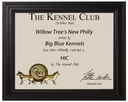 Willow Tree's New Philly HIC Certificate by BettaFreak123