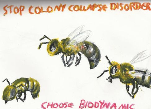 Colony Collapse Disorder by Asteracea