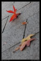 Feels Like Autumn by Aderet