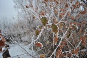 leaves in the cold by Liyamoon