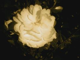Sepia Bloom by annieheart12