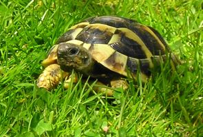 Tiny Tortoise by RMEdwards