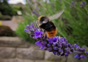Bumble Bee. by niksi13