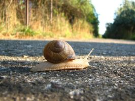 snails passing... give way by PetiteLutin