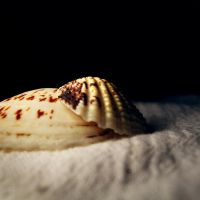 seashells by hellenFq