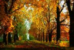 Golden Autumn II by BaxiaArt