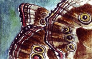 Wing Texture of Butterfly's by Mysticalpchan