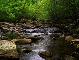 Hawn State Park - Pickle Creek by zoot-photo-bum