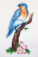 Eastern Blue Bird 2 by soulwithin465