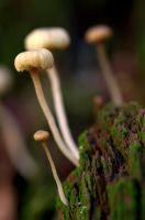 Tiny Forest Parasols by whisperfae