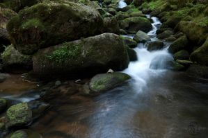 Stream Above Triberg Waterfall by Creative--Dragon