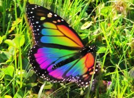 Butterfly of Many Shades by suricata5