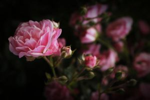 Stand out in the Darkness by My-Unclosed-Desires