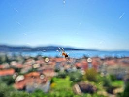 spider by BL00DYSunflowers