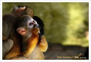 One monkey's tale by SonNycZ