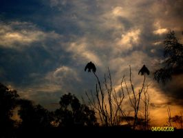 eagles by thesarim1