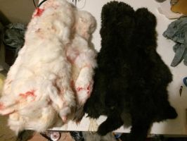 Domestic rabbit pelts by WylderTaxidermy