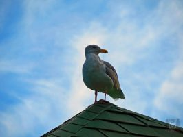 Seagull On Roof by wolfwings1