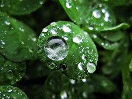 Drop on the Leaf by Whiro