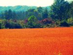 Sea of Orange by istandcorrected66