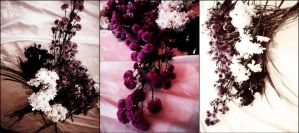 Profusion, pink by feanne